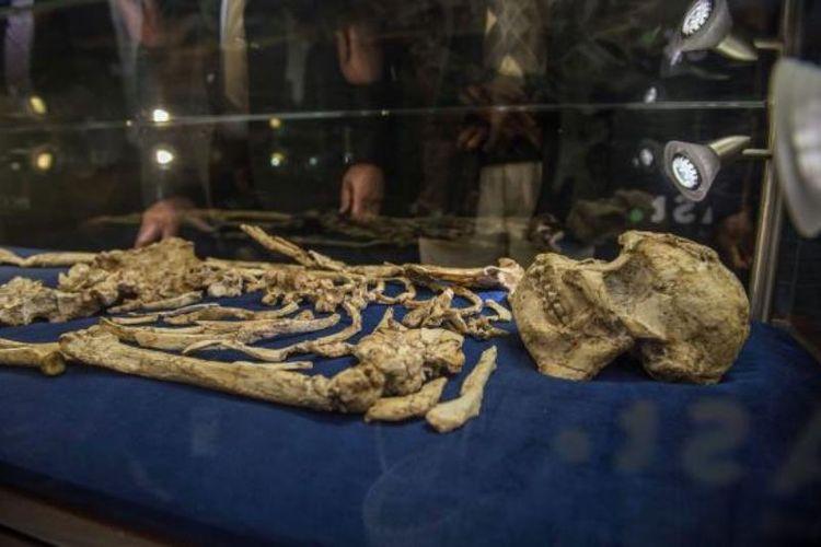 Tengkorak Australopithecus prometheus, yang dijuluki Little Foot sudah dipamerkan untuk umum.