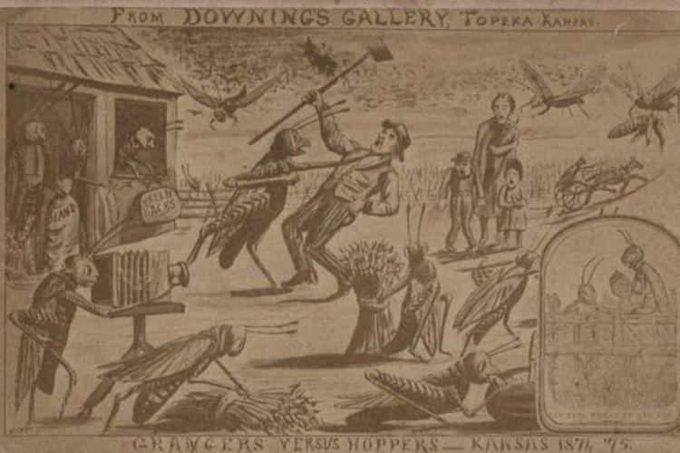Ilustrasi yang menunjukkan wabah belalang di Kansas. [Kansas Historical Society Via History]