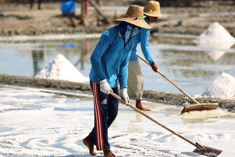 Petani garam sedang mengurai serta mengeringkan garam
