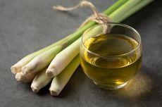 Obat Herbal Maag, Bantu Redakan Maag dari Rumah