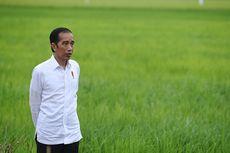 Menilik Proyek Food Estate di Indonesia yang Disebut Jokowi dalam Pidato Kenegaraan