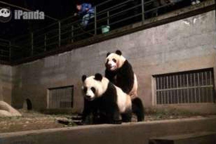 Wu Gang dan Cui Cui dalam salah satu adegan yang disiarkan langsung stasiun televisi iPanda.