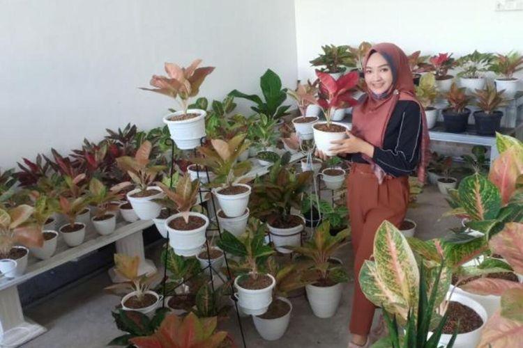 AGLONEMA?Eka Setyawati, warga Jalan Jambu Kota Madiun berada ditengah-tengah koleksi tanaman hias Aglonemanya yang dijual mulai Rp 50.000 hingga jutaan rupiah.