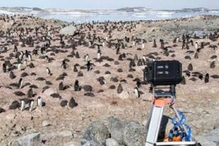Lebih dari 40 kamera mengirimkan foto-foto penguin melalui internet.