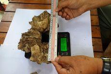 Diduga Kerangka Kepala Macan Tutul Jawa, BBKSDA Jatim Tunggu Uji Lab LIPI