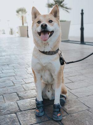 Fresh Pawz, sepatu untuk anjing