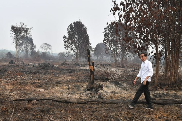 Presiden saat meninjau lokasi karhutla di Desa Merbau, Kecamatan Bunut, Kabupaten Pelalawan, Kota Pekanbaru, Riau, Selasa (17/9/2019) siang.