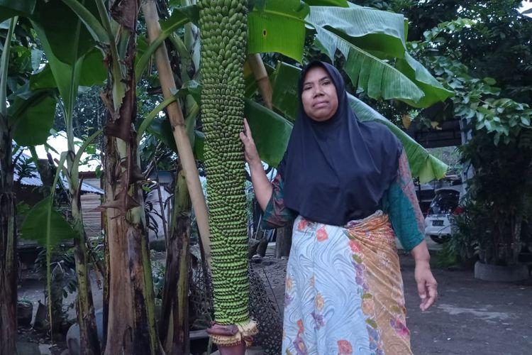 Memiliki buah yang banyak dan tandan yang panjang melebihi tinggi orang dewasa, warga menjulukinya pohon pisang seribu.