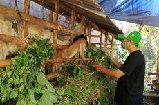 54 Dokter Akan Dampingi Pemeriksaan Hewan Kurban di Tangsel