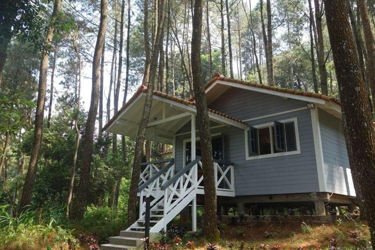 The Pine Forest Villas, salah satu hotel terunik di Puncak Bogor.