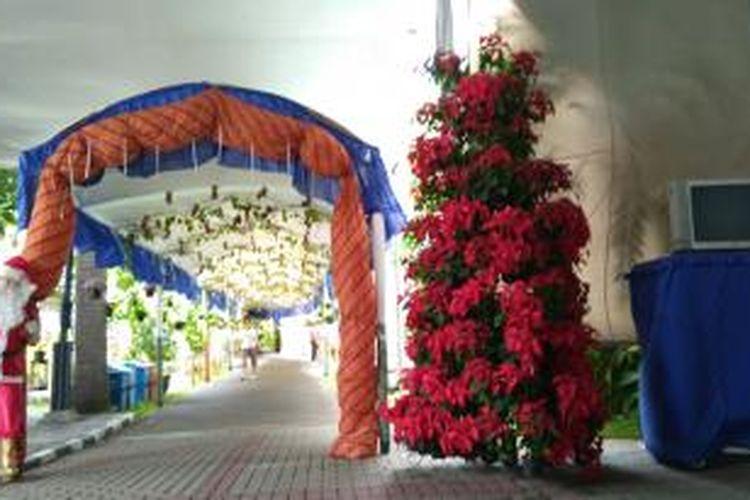 Pohon natal yang dibuat dari susunan pot tanaman kastuba di Gereja Katedral, Jakarta Pusat.