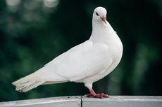 5 Jenis Burung yang Ramah dan Cocok Dijadikan Hewan Peliharaan