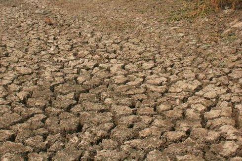 BMKG Bali Catat Suhu Panas Tertinggi dalam 30 Tahun Terakhir