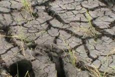 Kekeringan, 3.000 Hektar Sawah di Tasikmalaya Gagal Panen
