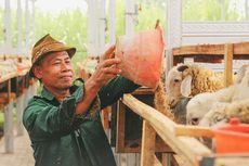 Tingkatkan Ekonomi Peternak Lokal dengan Berkurban di DD Farm