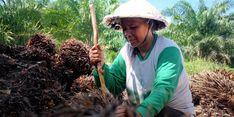 Kebijakan Pro-Perempuan ANJ: Kesetaraan Gender dan Pemenuhan Hak Pekerja Perempuan