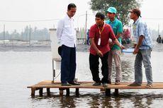 Jokowi dan Ekonomi Udang Indonesia