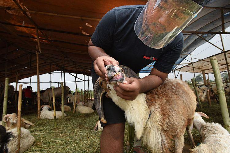 Warga memeriksa gigi kambing di sentra penjualan hewan kurban Cipocok, Serang, Banten, Kamis (23/7/2020). Menurut pedagang meski di tengah pandemi Covid-19, penjualan hewan kurban mengalami peningkatan dari biasanya 30 ekor menjadi 73 ekor dalam sehari dengan harga bervariasi.