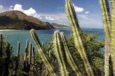 Kandungan Air Kaktus Berkhasiat untuk Kesehatan