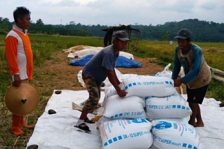 Petani gabah asal Purbalingga Fajar mengeluhkan impor beras tahun ini