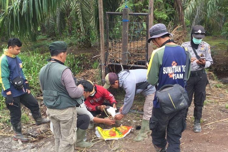 Petugas gabungan BKSDA memasang perangkap harimau di Kecamatan Palangiran, Kabupaten Indragiri Hilir.
