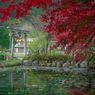Taman Monet di Perancis Dibuka Kembali untuk Para Wisatawan