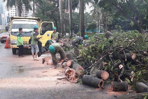 Hujan Deras, Pohon Tumbang Timpa Kabel Udara PLN di Jakarta Selatan