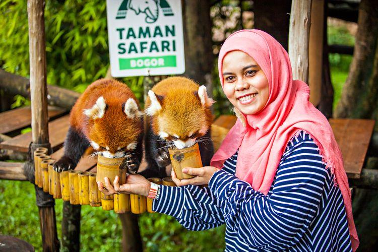 Seorang wisatawan terlihat memberi makan panda merah (Ailurus fulgens), mamalia yang berasal dari timur Himalaya dan selatan China, (1/2020).
