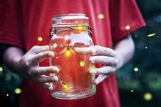 Cahaya Buatan Manusia Bikin Kunang-kunang Terancam Punah