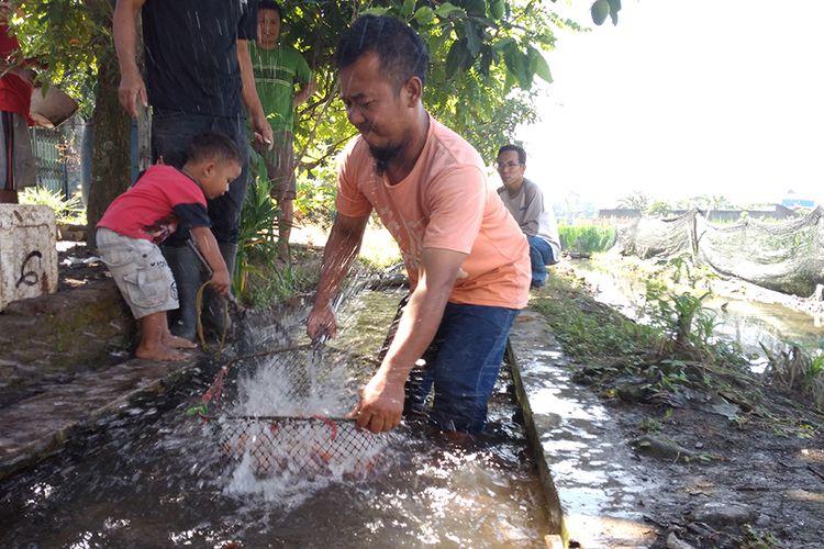 Warga sedang panen ikan nila di saluran irigasi di Klodran, Karanganyar, Jawa Tengah, Minggu (3/8/2017).