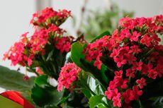 5 Bunga yang Cocok Diletakkan di Dalam Ruangan