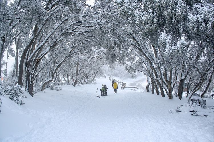 Resor ski Mount Buller, High Country, Victoria (Dok. Shutterstock/TonyNg)