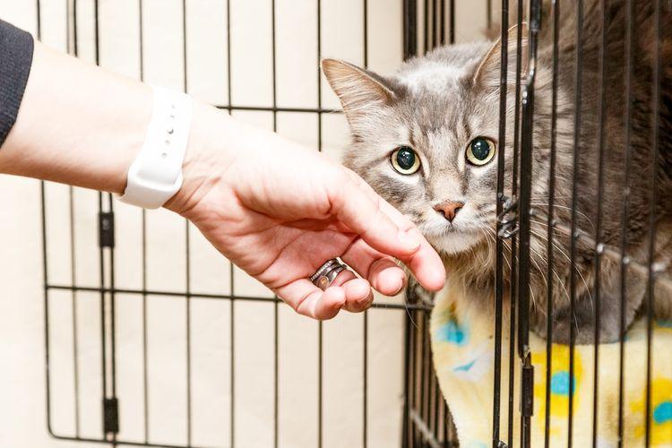 Ilustrasi kucing di dalam kandang, kandang kucing.