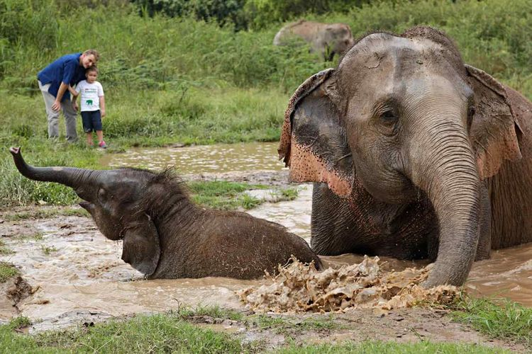 Gajah di Anantara Golden Triangle Elephant Camp & Resort