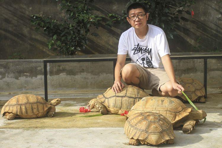 Andre Salim pemilik penangkara Nyandu Orto Turtle Palembang, Sumatera Selatan, Sabtu (27/3/2021). Di sini, kura-kura jenis Sulcata dengan nama latin Centrochelys Sulcata sengaja dikembang biakan untuk dijual karena peminatnya tinggi. Satu ekor kura-kura berukuran 5 cm dijual dengan harga Rp 1,3juta.