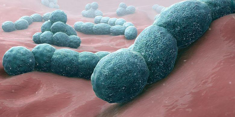 Ilustrasi bakteri Streptococcus pneumoniae penyebab penyakit meningitis.