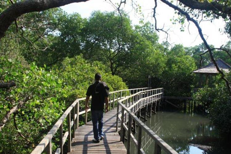 Sejuknya Wisata Mangrove Di Denpasar Tak Kalah Dengan