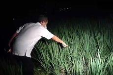 Tak Kunjung Pulang Jelang Malam, Sutoyo Ditemukan Tewas di Sawah akibat Terkena Jebakan Tikus Beraliran Listrik