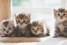 Bahayanya Memberikan Susu ke Kucing Peliharaan