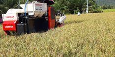 Ajak Petani di Agam Manfaatkan KUR, Mentan: Kini Petani Tak Perlu Risau