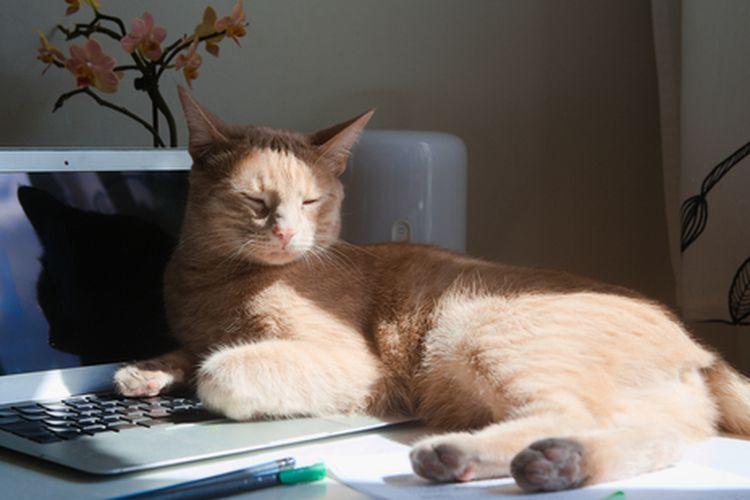Ilustrasi kucing duduk di laptop.