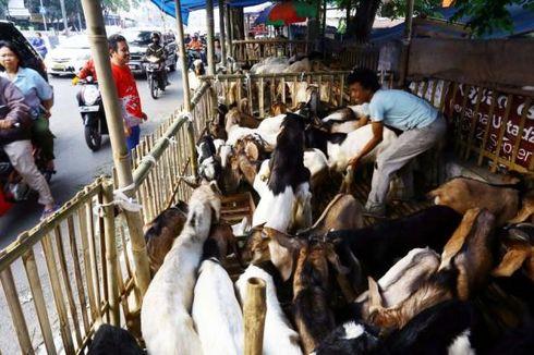 Di Medan, Hewan Kurban Belum Berstempel