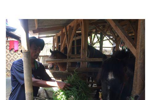 Pemilik Sebut Hoaks Informasi Kuda Terkapar karena Lelah, Minta Postingan yang Viral Dihapus