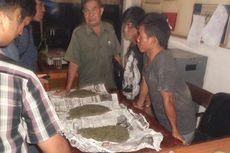 Polisi Ringkus Pemiliki 3 Kg Ganja di Bengkulu