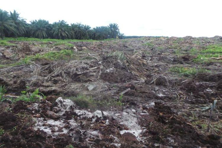 Lahan hutan yang sangat luas di wilayah Merauke dibuka untuk perkebunan sawit milik perusahaan-perusahaan dari dalam dan luar negeri, termasuk dari Singapura dan Korea Selatan.