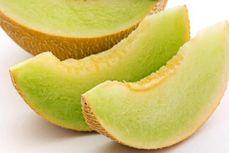 UGM Kembangkan Melon Unggul Bermedia Abu Vulkanik