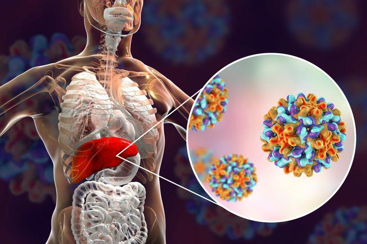 ilustrasi hepatitis, virus hepatitis