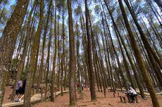 Jumlah Kunjungan Turis ke Pinus Sari Yogyakarta Meningkat Saat Akhir Pekan