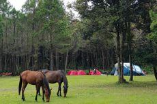 Jungle Milk di Lembang, Private Camping dan Piknik Tengah Hutan