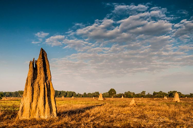 Magnetic Termite Mounds di Australia.
